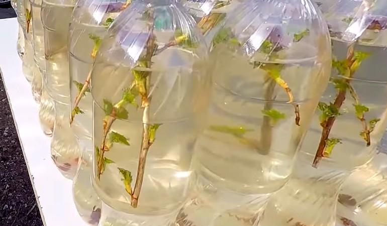 бутылки пластиковые с березовым квасом
