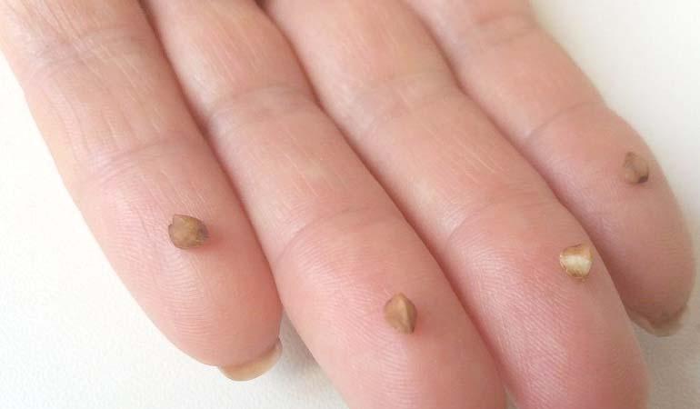 семена на пальцах